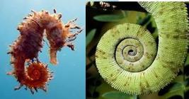 simbolo della spirale in natura