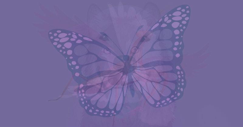 animale guida farfalla